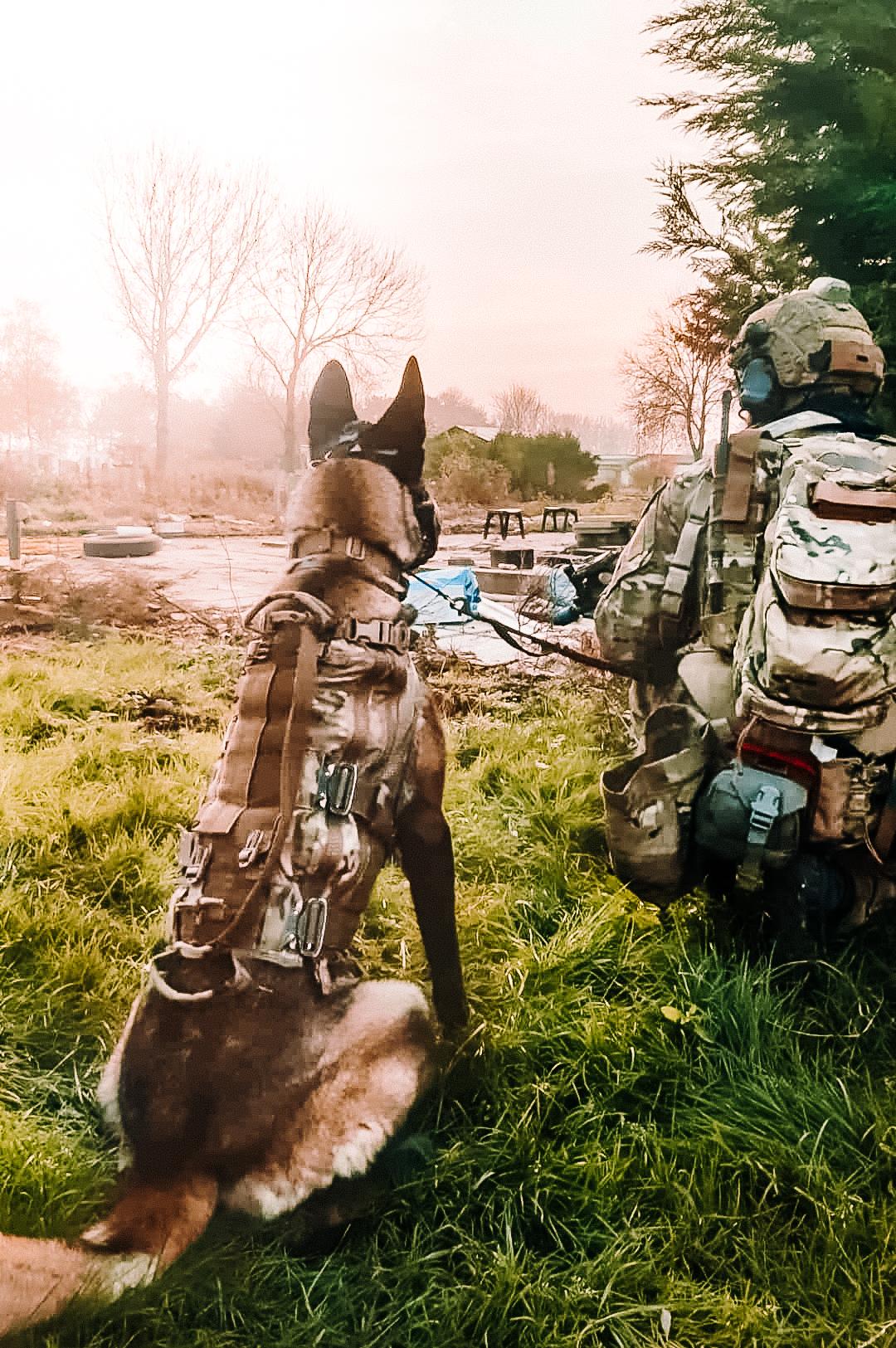 AWiAS K9 Spezialhunde