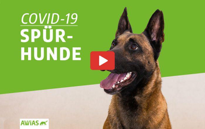 Covid-19 Spürhunde